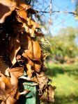 Autumn leaves on post